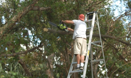 Jeremy wielding the chainsaw from the ladder